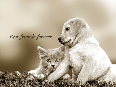 Best-friends-forever